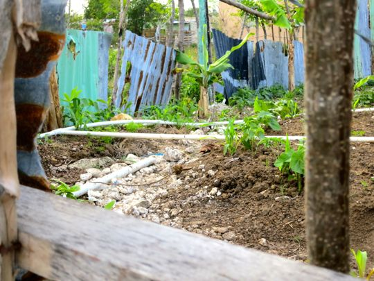 bygger-traadgaard