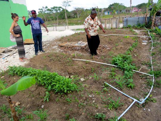 bygger-traedgaard-vaelgorenhet
