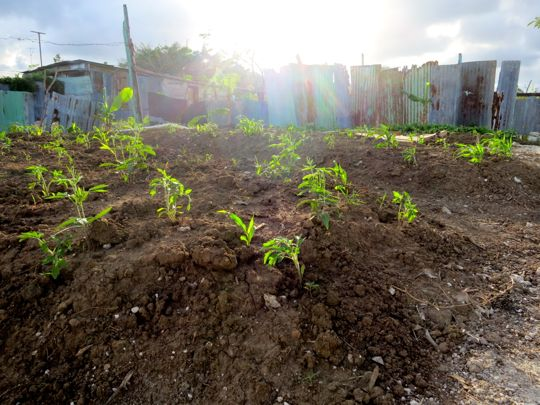 bygger-traedgaard-veron-mars