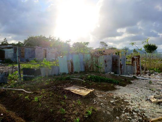 traedgaard-vaalgoenhet-dominikanska-republiken